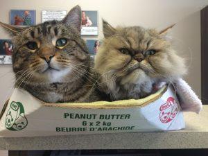 dean-lingo-peanut-butter-box